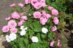 c_150_100_16777215_00_images_foto_image32.jpg